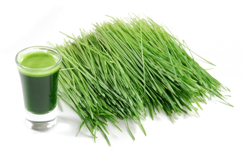 Wheatgrass contains chlorophyll a powerful blood builder, it has been found to improve skin and hair, build muscle and endurance.