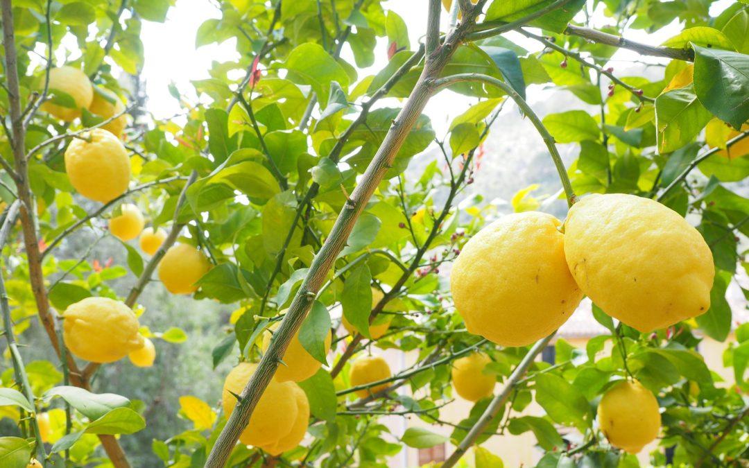 When life gives you lemons…make juice!